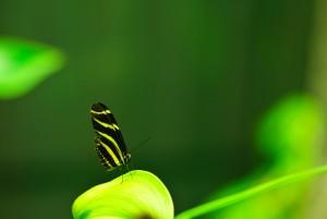farfalla-foresta-tropicale