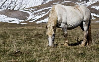 Campo imperatore cavallo abruzzo