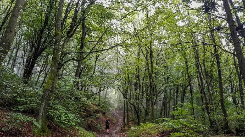 bosco appenninico
